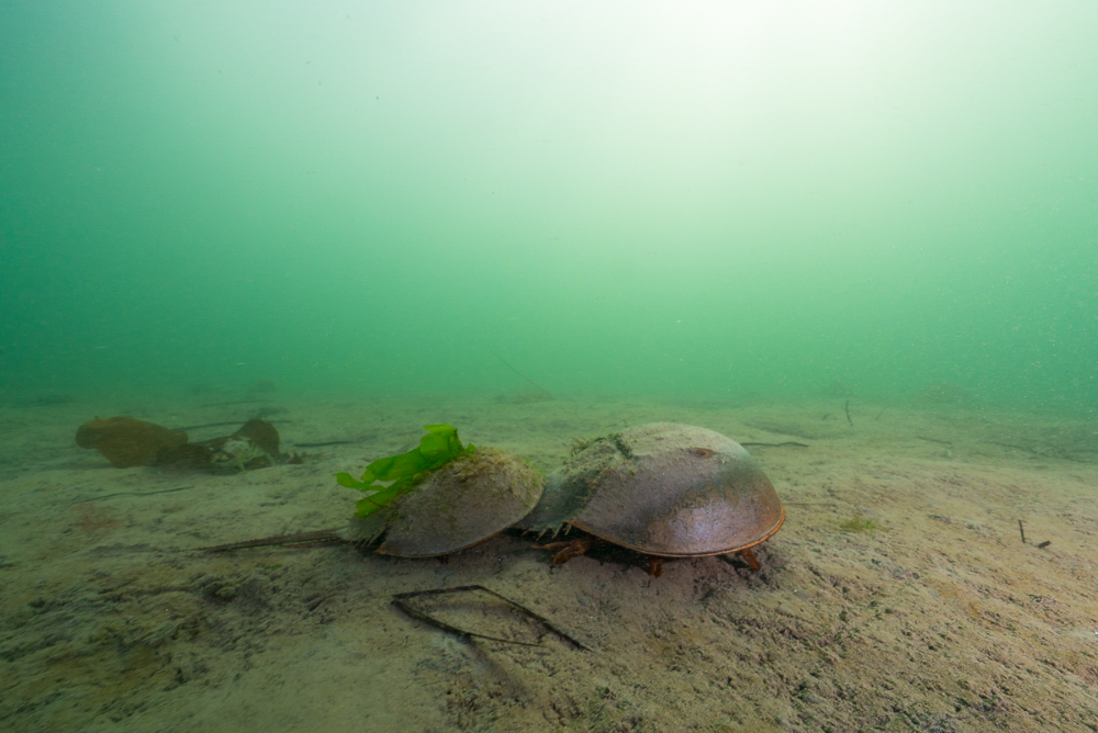 Great Bay Estuary, Durham, NH. Photo by Steve De Neef